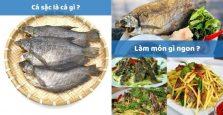 Cá sặc là cá gì? Cá sặc tươi làm món gì ngon? ĂN LÀ NGHIỀN